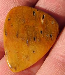 This stone guitar pick is made out of petrified palmwood.